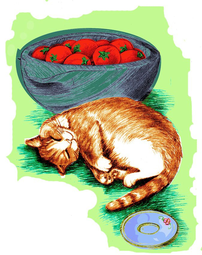 Cat and tomatoes