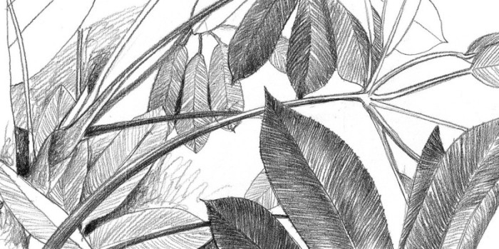 Tight pencil drawing-  leaves