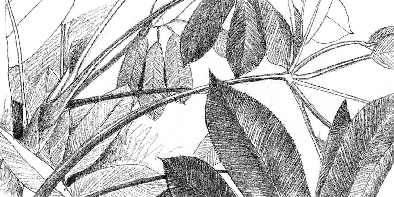 pencil_drawing_leaves