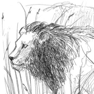 pencil_drawing_lion