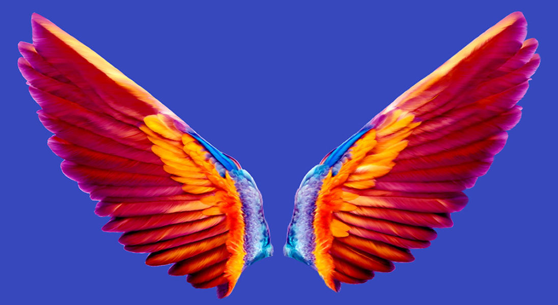 Close up - Coco wings - character from Little Wingsters TV series