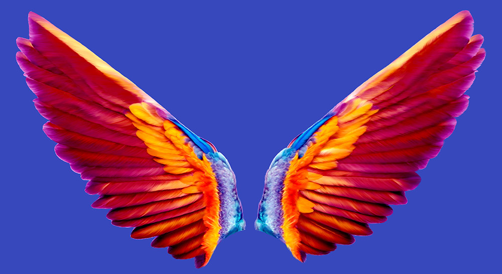 Coco wings on blue